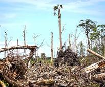 Report: HSBC is funding destruction of Indonesian rainforests, orangutan habitats