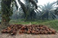 Malaysian palm price falls to near 2-month low on declining export demand