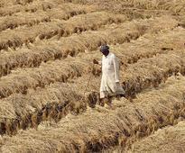 Uttarakhand: Farmer commits suicide in Udham Singh Nagar district; CM Trivendra Rawat orders probe