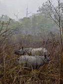 Trouble in India's rhino paradise
