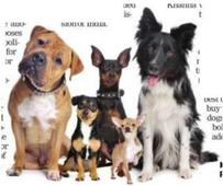 Ban on import of pedigree dogs for breeding lauded