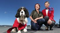 Virgin Australia to offer free flights to rescue dogs