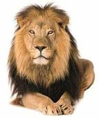 Lion to roar on Rajpath during Republic Day Parade