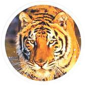 Caravan for tigers hits the road