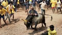 Tamil Nadu health minister C Vijaya Baskar's 'jallikattu' bull dies after crashing into a wall