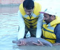 WWF-Pakistan and SWD successfully rescue stranded Indus River Dolphin calf