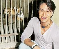 Tiger to hang out with his adopted tigress