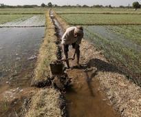 Odisha to disburse Rs 6000 cr cooperative loans to farmers