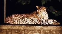 Forest officials cautious as Mulund locals spot leopard
