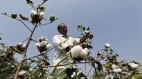 Monsanto pulls new GM cotton seed from India in protest; objects to proposal of sharing technology
