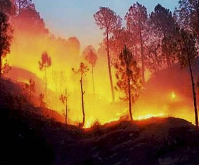 Summer fires in Himachal Pradesh forests under control
