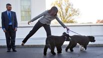 Obama's pets have official White House schedules
