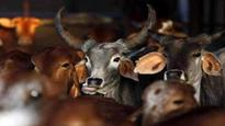 Jammu and Kashmir: Two injured in 'gau rakshaks' attack on nomad family, accused identified