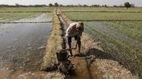 MP CM Shivraj Chauhan bats for farmers' welfare