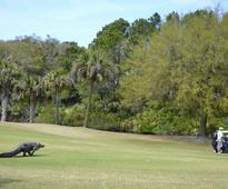 Hey look, this time the big alligator on a golf course wasn't in Florida (w/video)