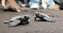 The turtle's race to survival on World Turtle Day