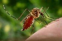 Dengue digs its fangs deeper, doctor tests +ve