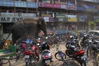 Berserk elephant smashes homes, terrorises Bengal town for 7-hrs
