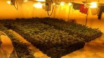 'Largest' city cannabis factory found