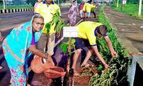 Green brigade plants saplings in Belagavi