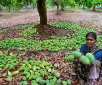 Horticulture hub of State badly hit