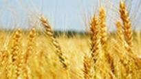 Icrisat inks pact with T-Hub for agricultural sector