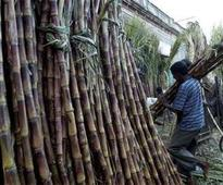 Tamil Nadu fixes state advisory price for sugarcane at Rs 2,850 per tonne