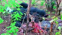 Trapped bear kills man in Mahbubnagar