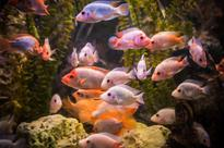 No more display or sale of Ornamental fishes
