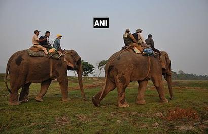 Rhino census begins in Kaziranga
