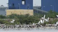 New rules can jeopardise Chennai wetland conservation