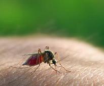 MCD steps up measures to combat dengue, chikungunya