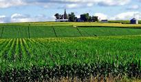 GM crops safe but not ultimate solution
