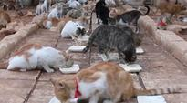 'Cat man of Aleppo' takes in abandoned 100 felines