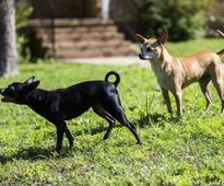 Vicious stray dog attacks leave Dallas neighborhoods in terror