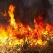 California Rural Communities Evacuated in Wake of Heat-driven Wildfire