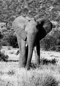 Magical Kenya: Samburu & Mt. Kilimanjaro at Amboseli