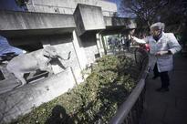 'Most beloved elephant in Japan,' Hanako, dies, aged 69