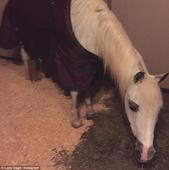 Lady Gaga flies home for Christmas with her pet dog Koji