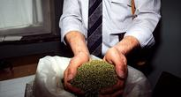 High Society: Italian Duke Arrested for Growing Cannabis in Ancestral Castle