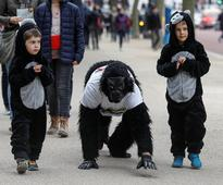 Man In Gorilla Suit Finishes London Marathon After 6-Day Charity Crawl