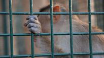 Call for more animal welfare controls in Chinese research