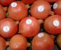 Kimaye pomegranate fresh form India
