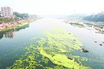 Twin rivers sound algae alert