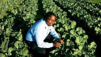 Zim men create thriving farm on useless land in Malmesbury