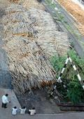Farmers favour sale of wood pulp to paper mills through AMCs