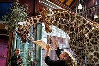 Wild beasts are painting at the San Francisco Zoo