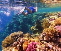Under the sea on Great Barrier Reef