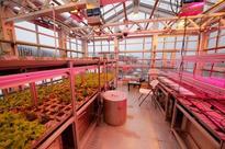 Evonik helping Antarctic scientists grow fresh veggie