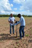 Texas A&M AgriLife Research leading organic grain crop study